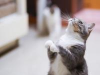 adorable-animal-animal-photography-1543801