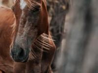 animal-animal-photography-blur-1730759