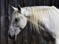 animal-equine-head-209045