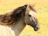 animal-horse-mammal-15243