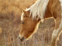 animal-photography-animals-grazing-37991